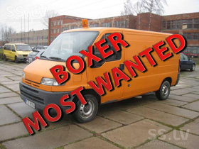 Most Wanted Boxer